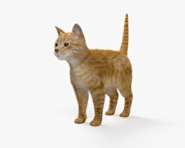 3D model of Ginger Cat HD