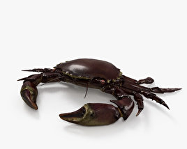 3D model of Velvet Crab HD