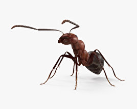 3D model of Ant HD
