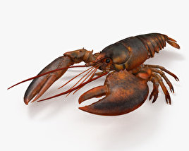 3D model of Lobster HD