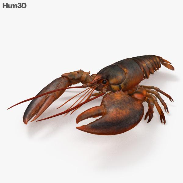 Lobster HD 3D model