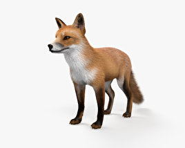 3D model of European Red Fox HD