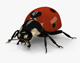 3D model of Ladybird HD