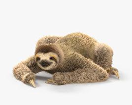 Three-Toed Sloth HD 3D model