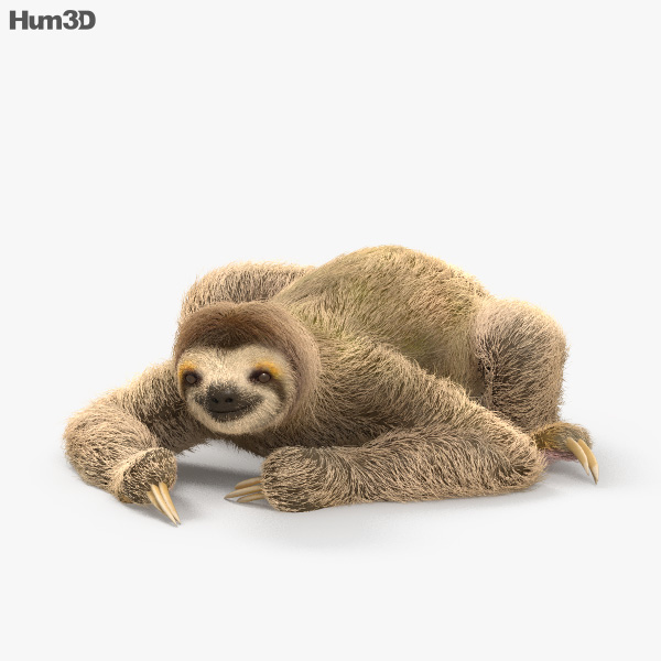 Three-Toed Sloth HD 3D model