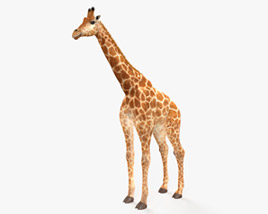 3D model of Giraffe HD