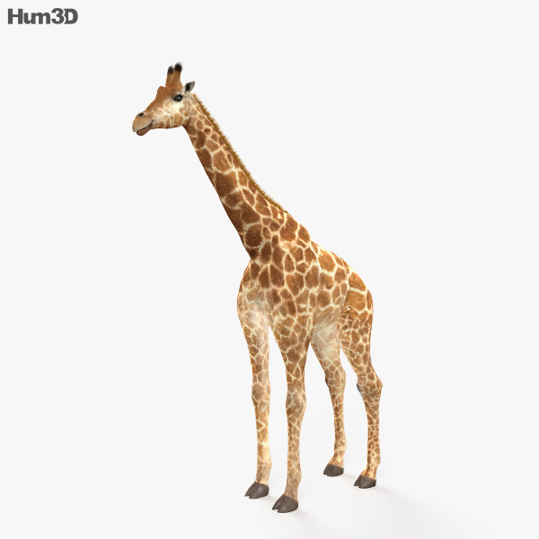 Giraffe HD 3D model