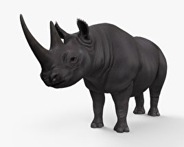 Black Rhinoceros HD 3D model