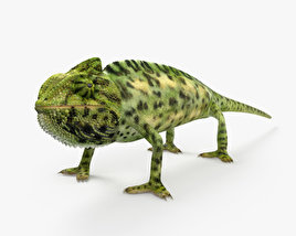 3D model of Veiled Chameleon HD