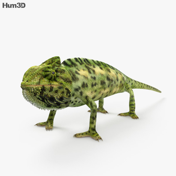 Veiled Chameleon HD 3D model