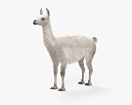 3D model of Llama HD