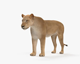 3D model of Lioness HD