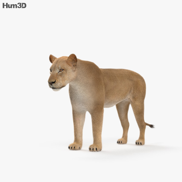 Lioness HD 3D model