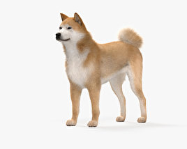 3D model of Akita Inu HD