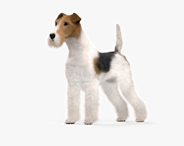 3D model of Wire Fox Terrier HD