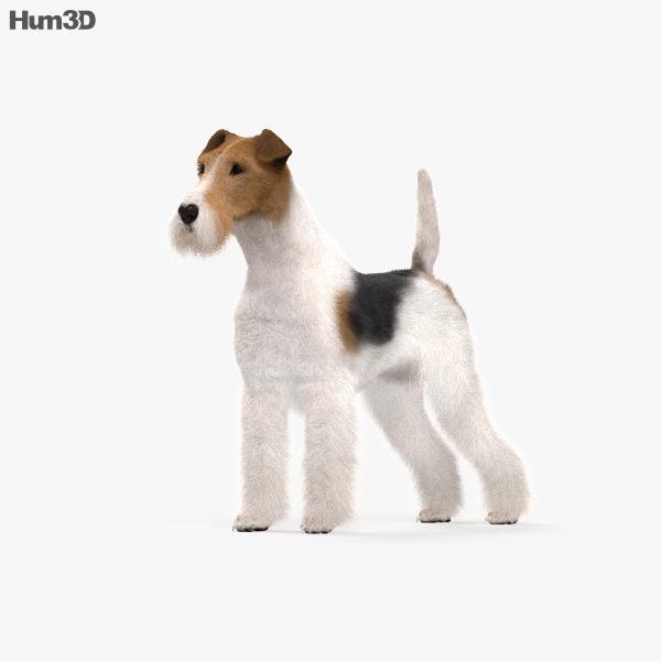Wire Fox Terrier HD 3D model