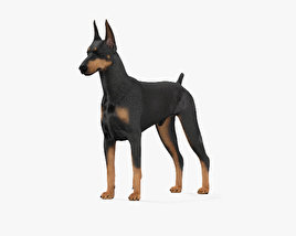 Doberman Pinscher HD 3D model