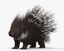 3D model of Porcupine HD