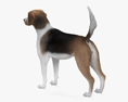 English Foxhound HD 3d model