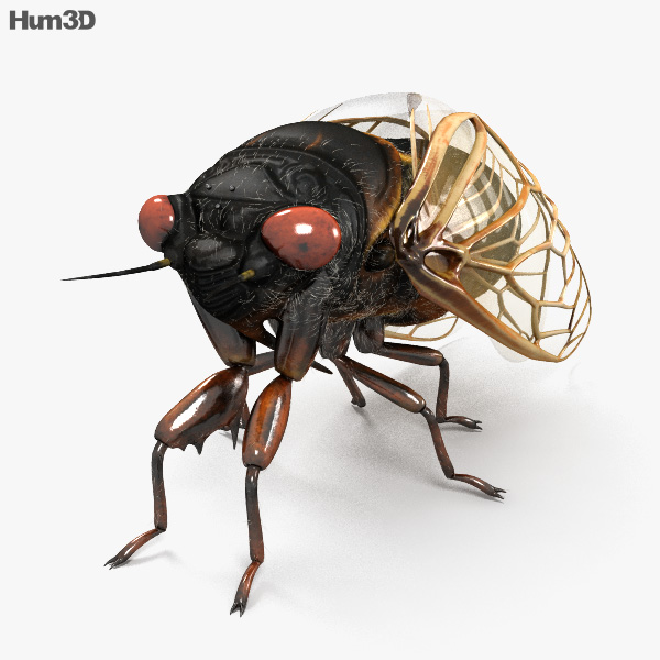 3D model of Cicada HD