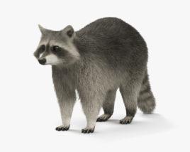 3D model of Raccoon HD