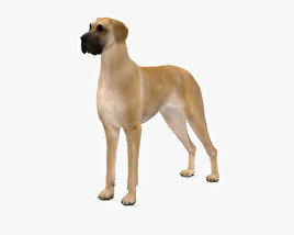 3D model of Great Dane HD