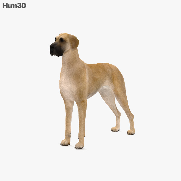Great Dane HD 3D model