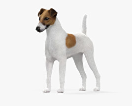 Fox Terrier HD 3D model