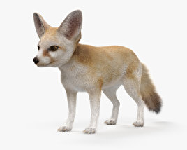3D model of Fennec Fox HD