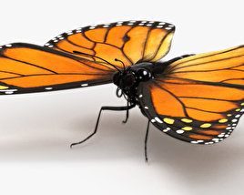 Monarch Butterfly HD 3D model
