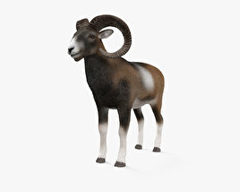3D model of Mouflon HD