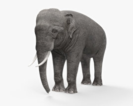 3D model of Asian Elephant HD