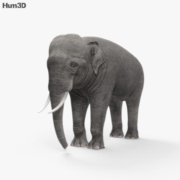 Asian Elephant HD 3D model