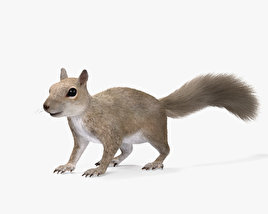 3D model of Squirrel HD