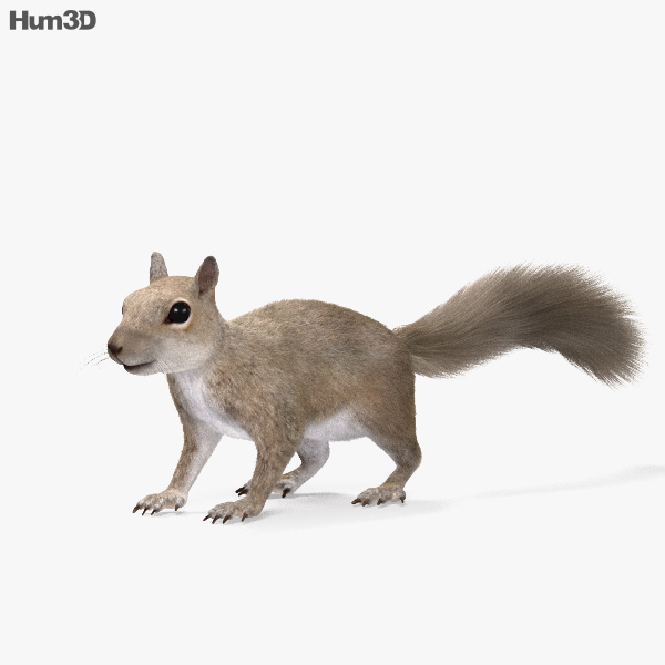 Squirrel HD 3D model