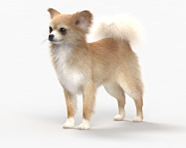 3D model of Chihuahua HD