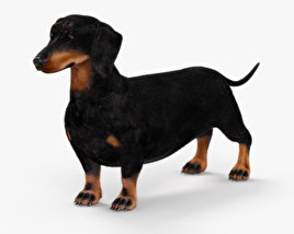 Dachshund HD 3D model