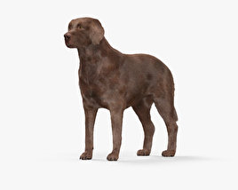 Labrador Retriever Chocolate HD 3D model
