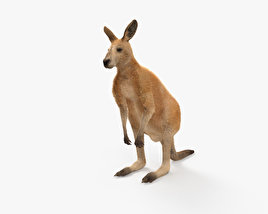 3D model of Kangaroo HD
