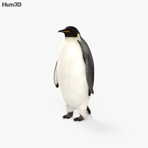 Emperor Penguin HD 3D model
