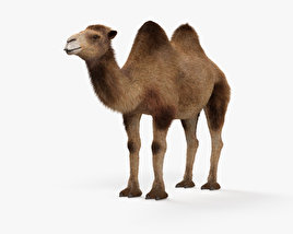 3D model of Camel HD