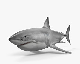 Great White Shark HD 3D model