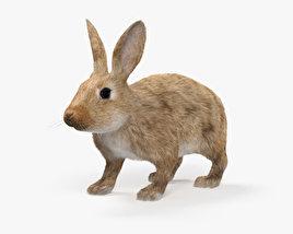 Common Rabbit HD 3D model