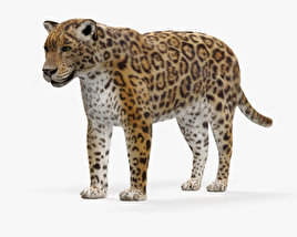 3D model of Jaguar HD