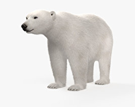 3D model of Polar Bear HD