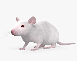 3D model of Mouse White HD