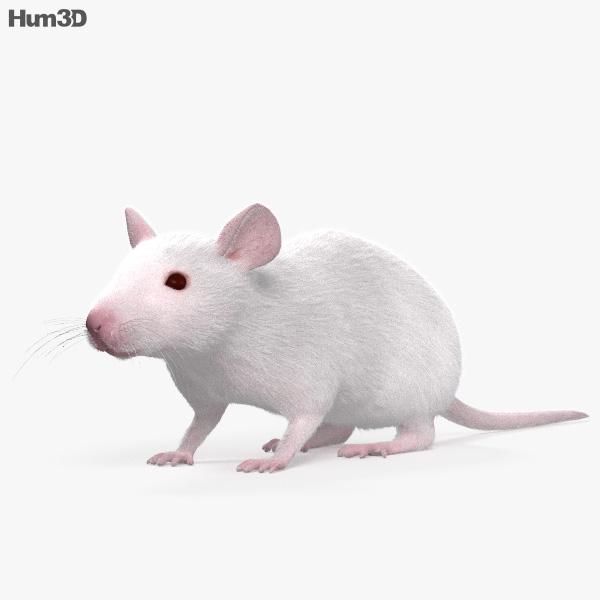 Mouse White HD 3D model