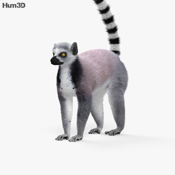 Ring-Tailed Lemur HD 3D model
