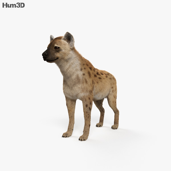 Spotted Hyena HD 3D model