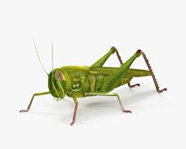 Grasshopper HD 3D model